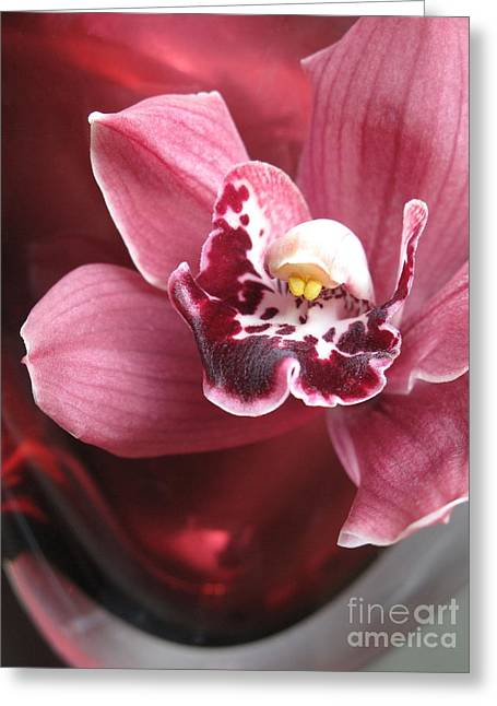 Maureen Photographs Greeting Cards - Orchid in Red Glass Greeting Card by Maureen J Haldeman