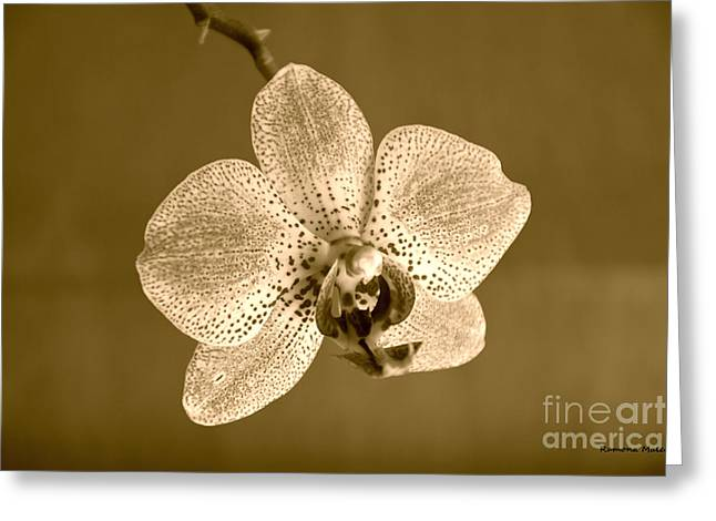 Nature Center Greeting Cards - Orchid in sepia Greeting Card by Ramona Matei
