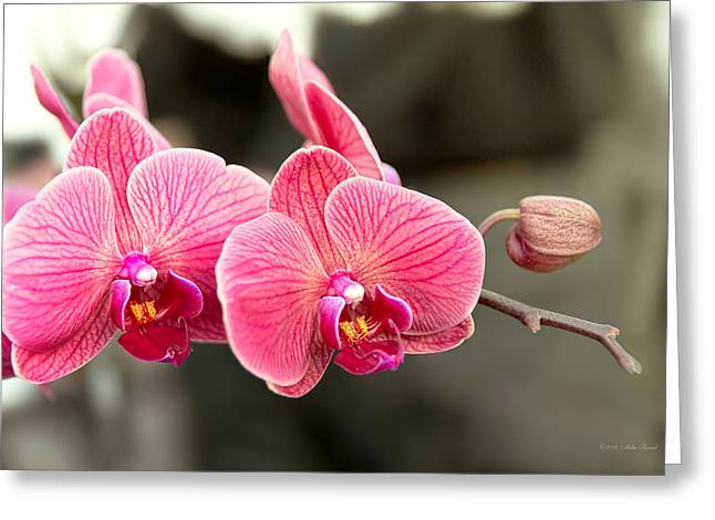 Phalaenopsis Orchid Greeting Cards - Orchid - It takes two to tango Greeting Card by Mike Savad