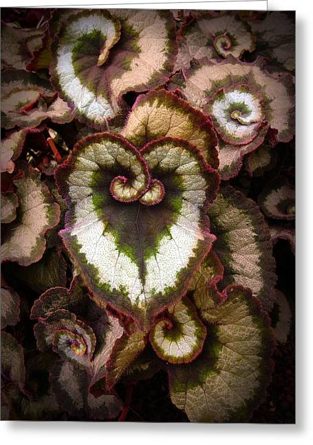 Abstract Shapes Greeting Cards - Orchid leaves Greeting Card by E  Kraizberg