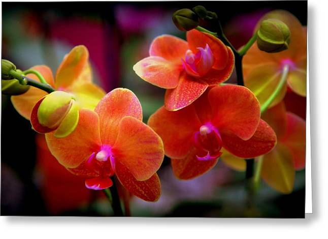 Freaky Greeting Cards - Orchid Melody Greeting Card by Karen Wiles