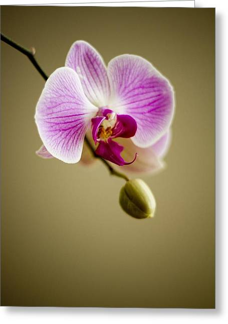 Herbage Greeting Cards - Orchid Greeting Card by Mountain Dreams