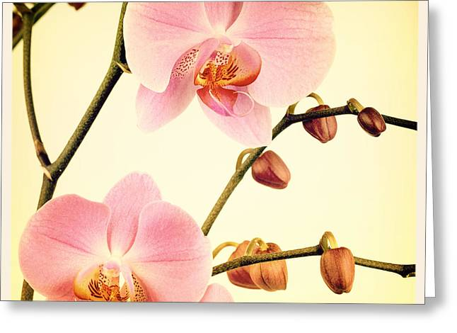 Texture Flower Greeting Cards - Orchid old photo Greeting Card by Jane Rix