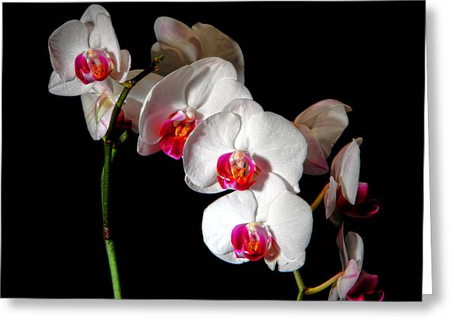 Orchidaceae Greeting Cards - Orchid on Black Greeting Card by Olivier Le Queinec