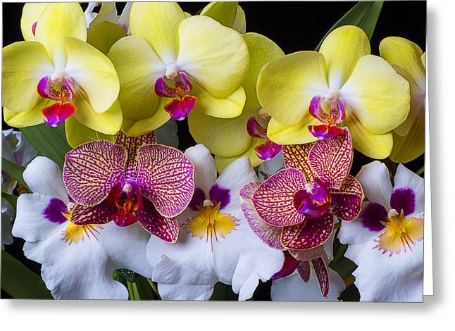 White Orchid Greeting Cards - Orchid paradise  Greeting Card by Garry Gay