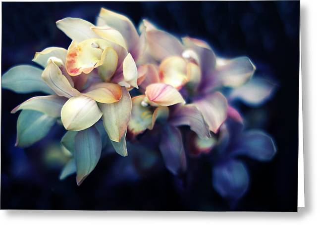 Orchid Petals Greeting Cards - Orchid Petals Greeting Card by Jessica Jenney