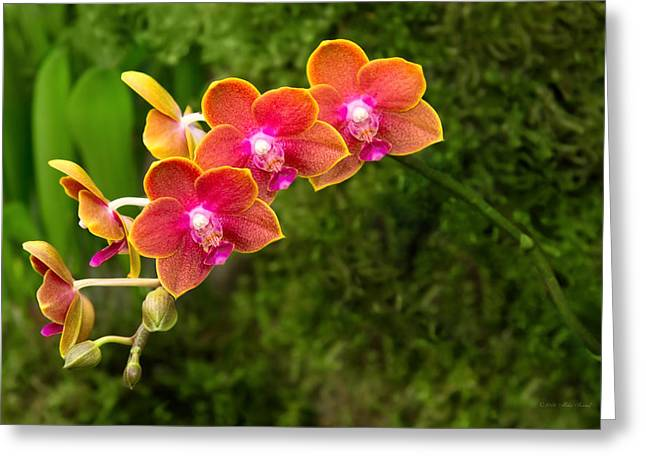 Tying Greeting Cards - Orchid - Phalaenopsis - Tying Shin Cupid Greeting Card by Mike Savad