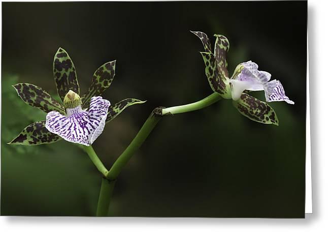 Interior Still Life Greeting Cards - Orchid Greeting Card by Ram Vasudev