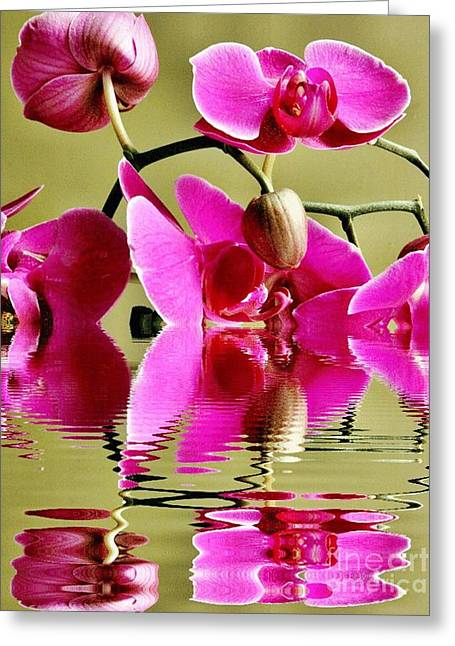 Floral Digital Art Greeting Cards - Orchid Reflection Greeting Card by Judy Palkimas