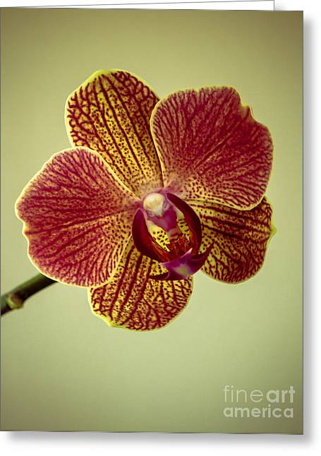 Picturesqueness Greeting Cards - Orchid Greeting Card by Robert Bales