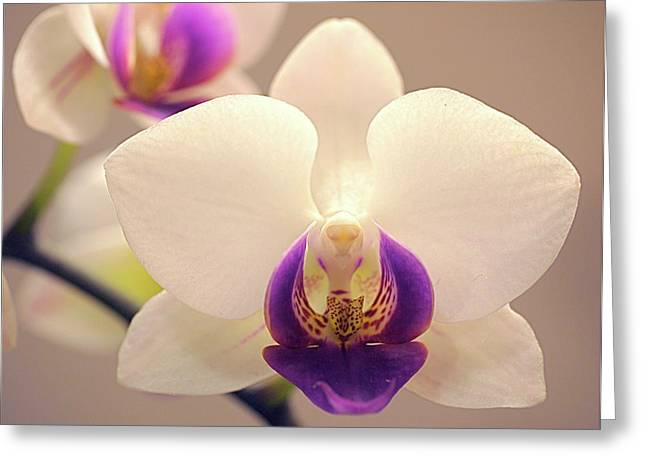 Phalenopsis Greeting Cards - Orchid Greeting Card by Rona Black