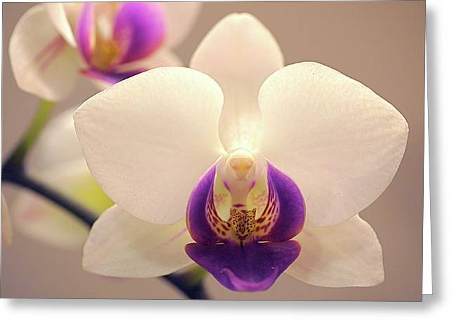 Phalaenopsis Orchid Greeting Cards - Orchid Greeting Card by Rona Black