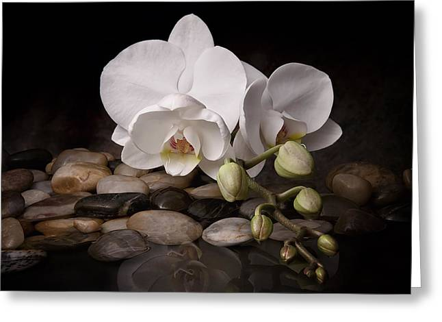 Pebbles Greeting Cards - Orchid - Sensuous Virtue Greeting Card by Tom Mc Nemar