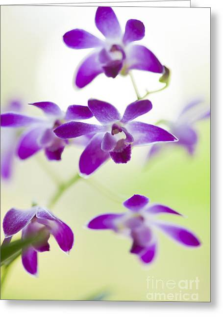 Oda Greeting Cards - Orchid Greeting Card by Soyhan Erim