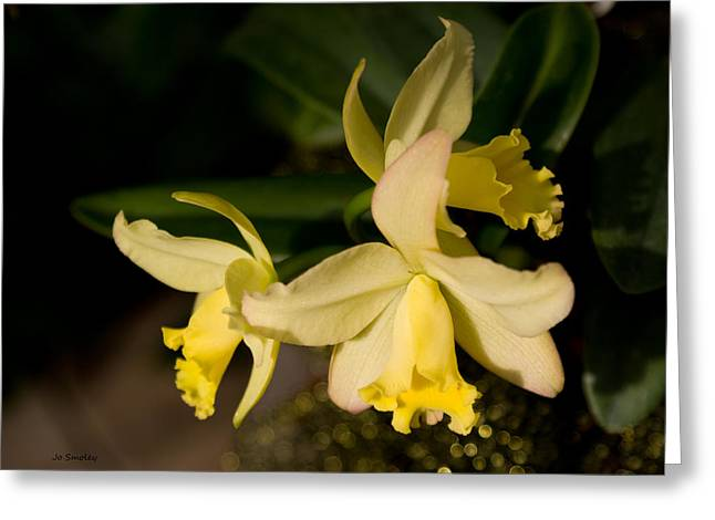 Cattleya Greeting Cards - Orchid Sunshine Greeting Card by Joanne Smoley