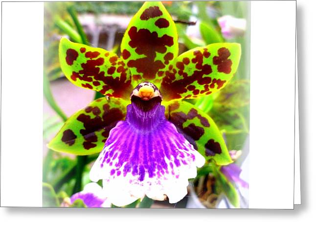 Orchid Greeting Card by The Creative Minds Art and Photography
