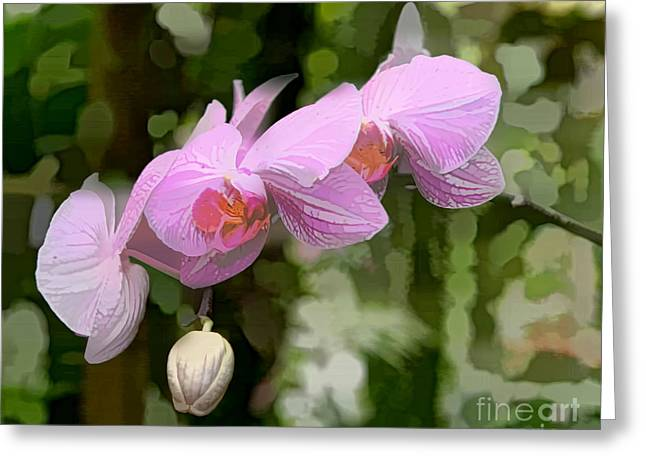 Nature And Landscape Photography Greeting Cards - Orchid  Greeting Card by Tom Prendergast