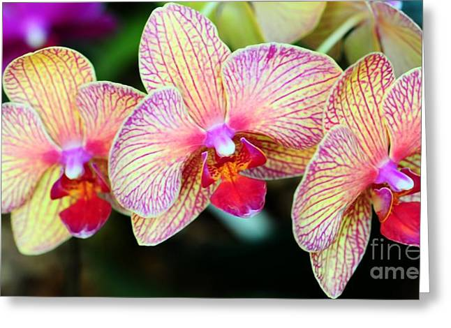 Orchid Trio Greeting Card by Kathleen Struckle