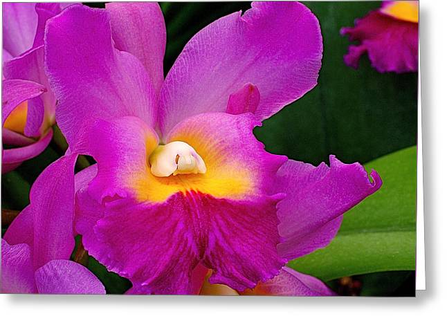 Orchid Variations 1 Greeting Card by Rona Black