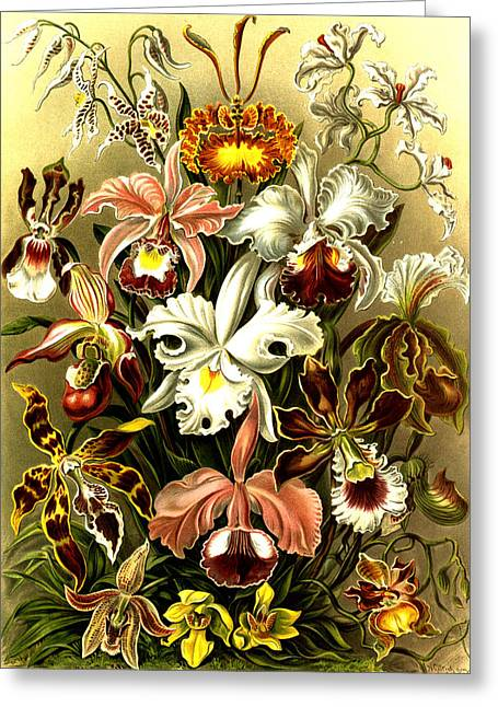 Plant Life Digital Greeting Cards - Orchideae Greeting Card by Unknown