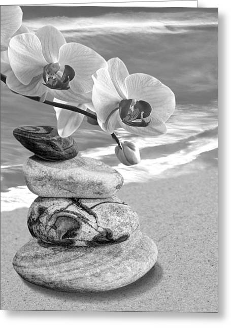 Gills Rock Greeting Cards - Orchids and Pebbles on the Sand in Black and White Greeting Card by Gill Billington