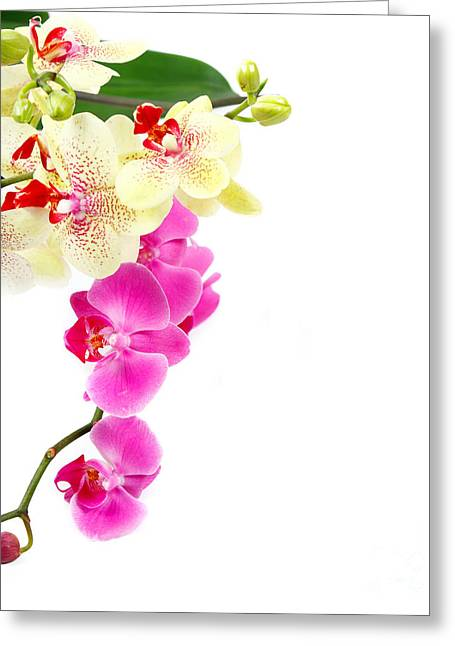 Space Pyrography Greeting Cards - Orchids Greeting Card by Boon Mee