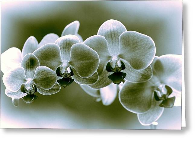 Perfumer Greeting Cards - Orchids Greeting Card by Dan Sproul