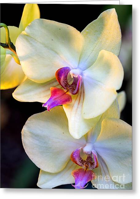 Florida Flowers Pyrography Greeting Cards - Orchids Greeting Card by Eyzen Medina