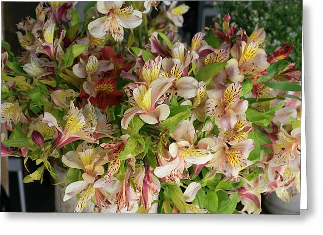 Orchids For Sale In Main Street Market Greeting Card by Panoramic Images