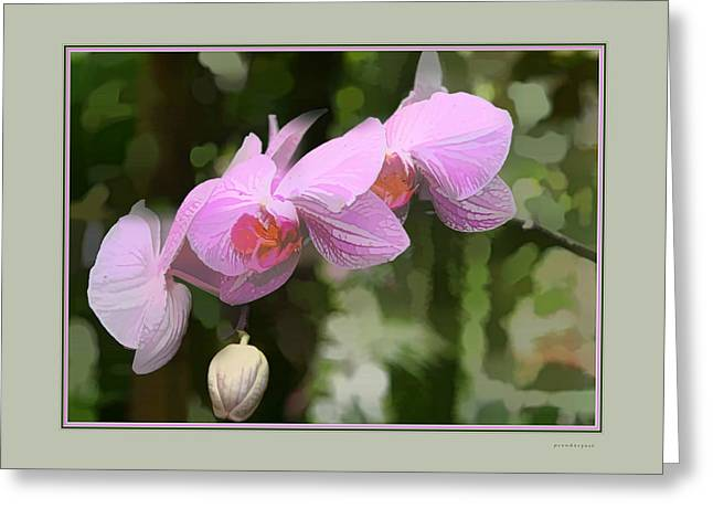 Artistic Landscape Photos Greeting Cards - Orchids II Greeting Card by Tom Prendergast