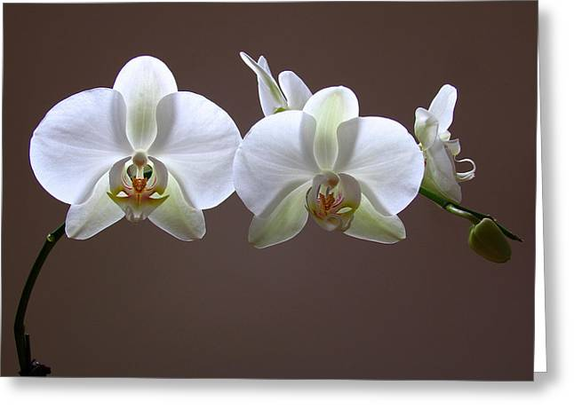 Keeffe Greeting Cards - Orchids Illuminated Greeting Card by Juergen Roth