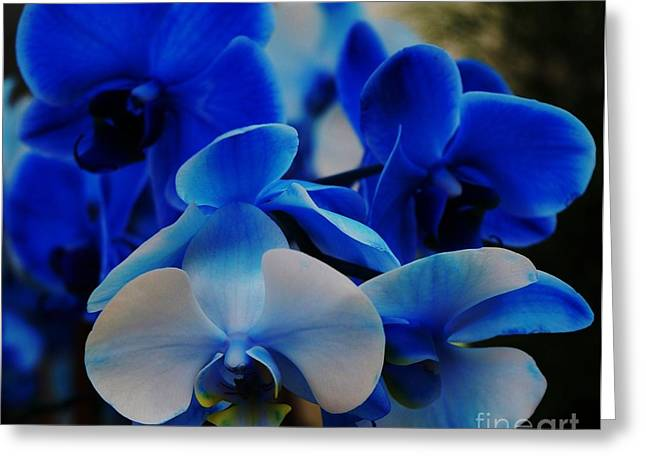 Hannukah Greeting Cards - Orchids In Blue Kahol Ve Lavan Greeting Card by Marcus Dagan