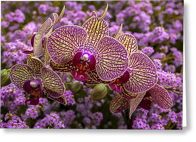 Gorgeous Greeting Cards - Orchids in pink flowers Greeting Card by Garry Gay