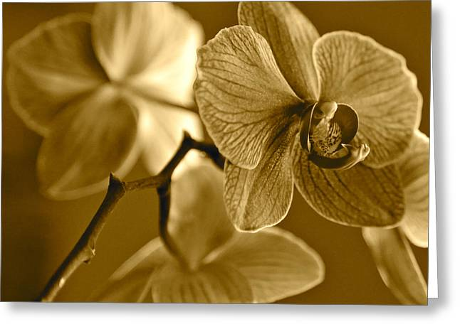 Sepia Flowers Greeting Cards - Orchids in Sepia Greeting Card by Carol Groenen
