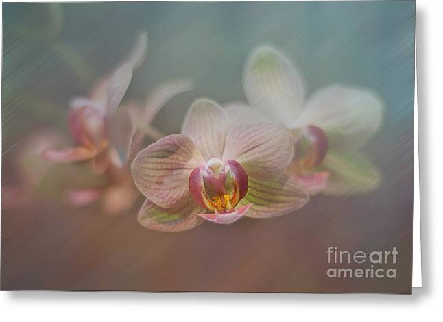 Orchids in the Mist Greeting Card by John Kain