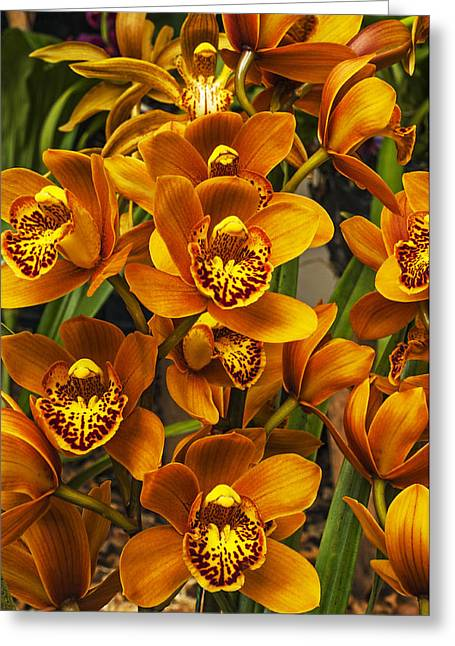 Orchis Greeting Cards - Orchids Greeting Card by Jess Kraft