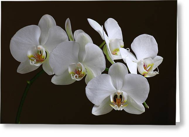 Orchids Greeting Card by Juergen Roth