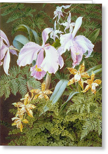 Flora Drawings Greeting Cards - Orchids Greeting Card by Marian Emma Chase