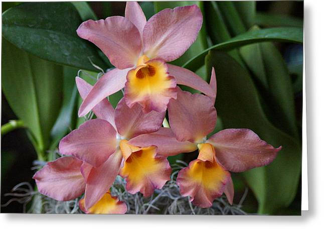 Orchids Art Greeting Cards - Orchids Greeting Card by Sandy Keeton