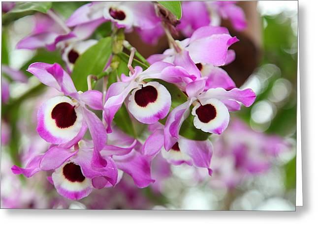 Orchids Greeting Cards - Orchids - US Botanic Garden - 011326 Greeting Card by DC Photographer