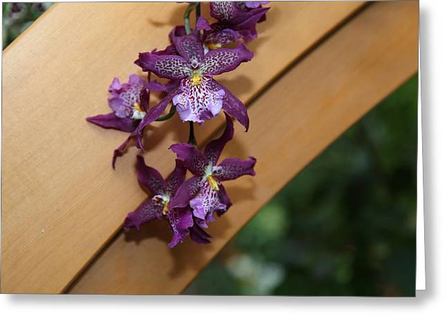Orchids - Us Botanic Garden - 01134 Greeting Card by DC Photographer