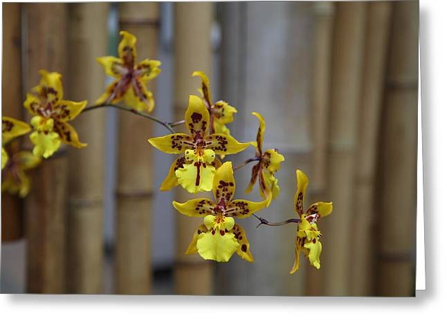 House Greeting Cards - Orchids - US Botanic Garden - 011342 Greeting Card by DC Photographer