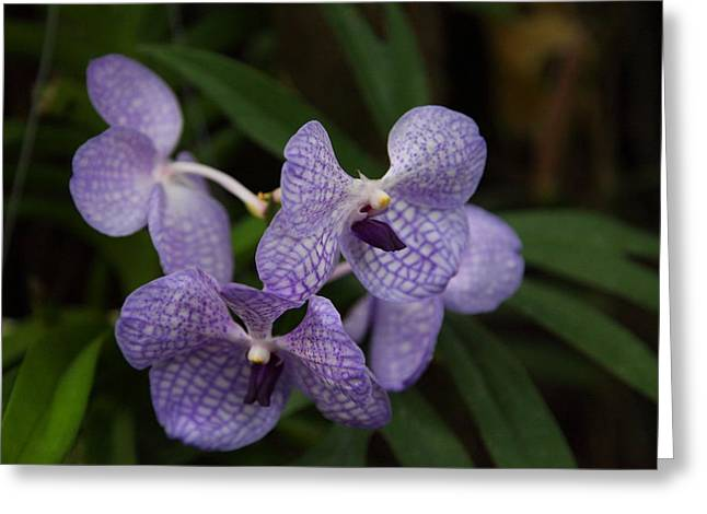 Orchids Greeting Cards - Orchids - US Botanic Garden - 011354 Greeting Card by DC Photographer