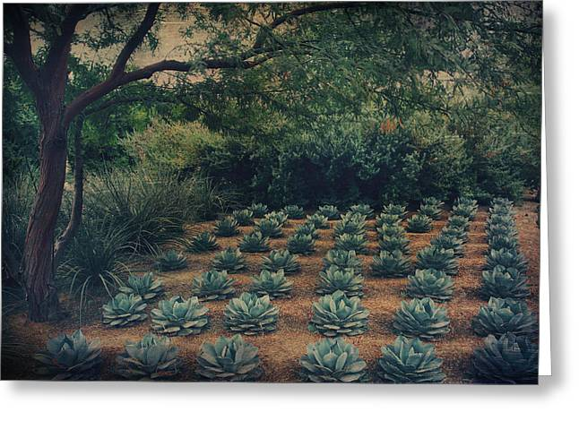 Cacti Digital Greeting Cards - Order Greeting Card by Laurie Search