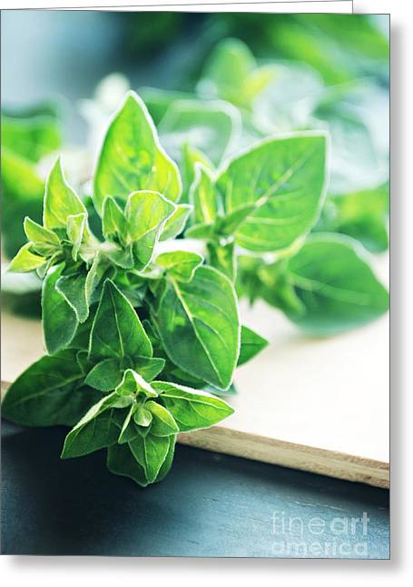 Green Leafs Greeting Cards - Oregano Greeting Card by HD Connelly