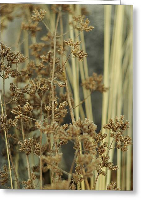 Soft Tones Greeting Cards - Oregano in Winter Greeting Card by Rebecca Sherman