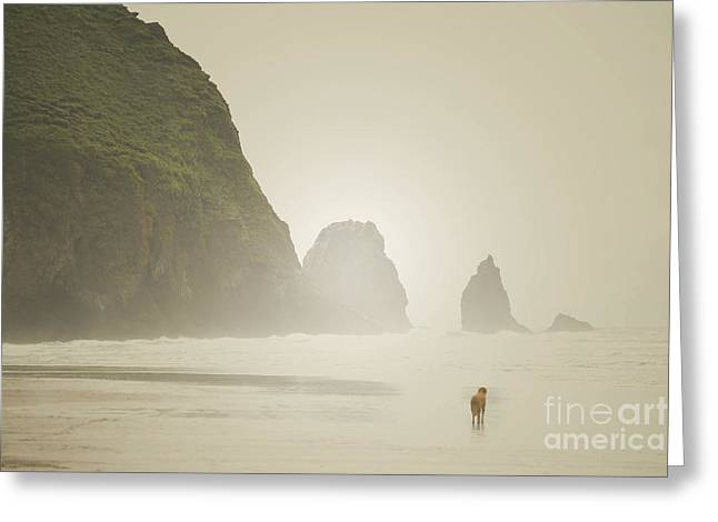 Dog Beach Card Greeting Cards - Oregon Beach Dog Greeting Card by Andrea Hazel Ihlefeld