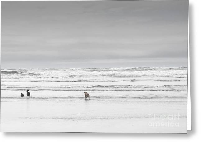 Dog Beach Card Greeting Cards - Oregon Coast Dogs Greeting Card by Andrea Hazel Ihlefeld