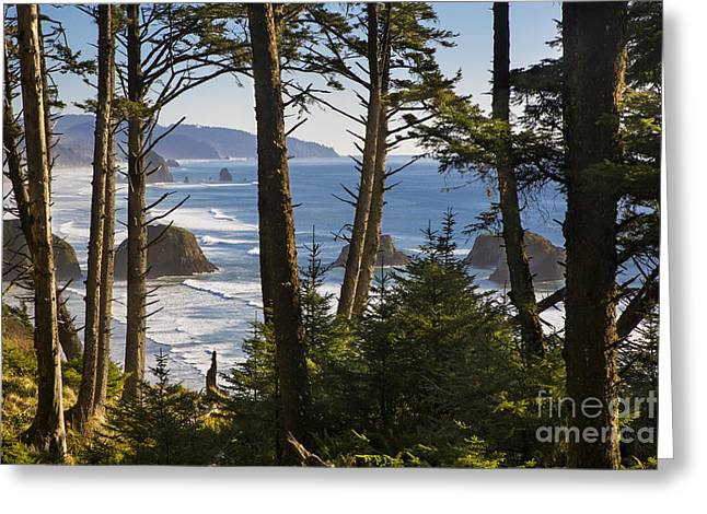 Fir Trees Greeting Cards - Oregon Coast View Greeting Card by Brian Jannsen