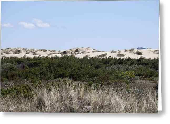 Oregon Dunes National Recreation Area Greeting Cards - Oregon Dunes National Recreation Area - 0003 Greeting Card by S and S Photo